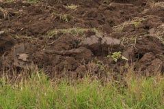 被耕的领域的片段 免版税图库摄影