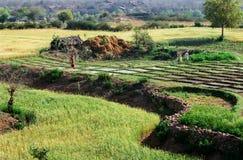 被耕种的印度地产 免版税图库摄影