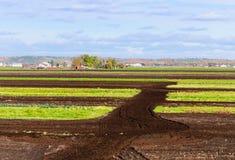 被耕种的领域 库存照片