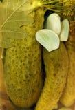 被腌制的黄瓜 库存照片