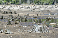 被自毁的森林 免版税图库摄影
