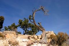被致残的结构树 库存照片
