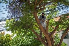 被裁减的剁安全和井勤务兵的一棵树 免版税图库摄影