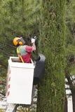 被装备的工作者修剪在起重机的一棵树 从事园艺 库存照片