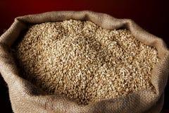 被装载的大袋麦子 免版税库存图片