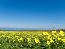 被装载的花草甸黄色 库存照片