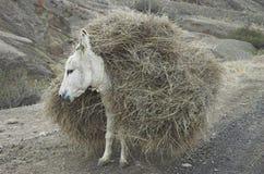 被装载的驴 库存图片