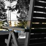 被观察的积雪的自然 免版税库存照片