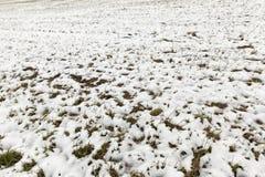 被解冻的雪和干草 库存照片