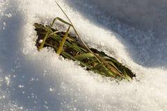 被解冻的雪 免版税库存图片