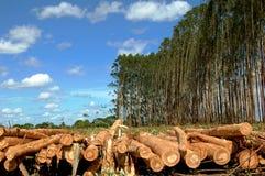 被记录的木头 免版税库存图片