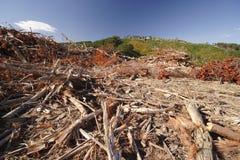 被记录的森林 免版税库存照片