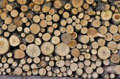 被记录的结构树纹理 库存照片