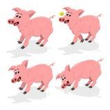 被设置的伟大的动画片猪 库存图片