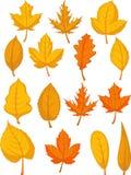 被设置的叶子-红色秋叶 免版税库存图片