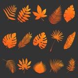 被设置的叶子 免版税图库摄影