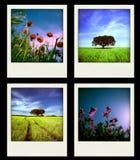 被设置的四张即时本质照片春天 免版税库存照片