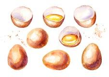 被设置的大鸡蛋 水彩例证,隔绝在白色背景 库存照片