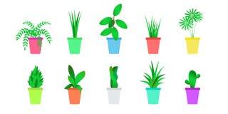 被设置的平的室内植物 家庭花被隔绝的传染媒介  免版税库存照片