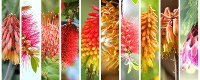 被设置的当地澳大利亚植物 免版税库存图片