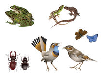 被设置的惊人的自然-动物夫妇 库存照片