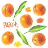 被设置的手拉的桃子 免版税库存照片