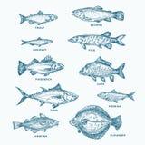 被设置的手拉的海洋或海和河十鱼 三文鱼和金枪鱼或者派克和鲥鱼,鲱鱼,鳟鱼的一汇集 库存例证