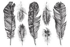 被设置的手拉的羽毛 免版税库存图片