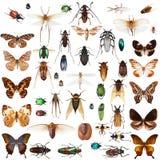 被设置的昆虫 免版税库存图片