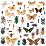 被设置的昆虫 免版税库存照片