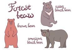 被设置的森林熊 图库摄影