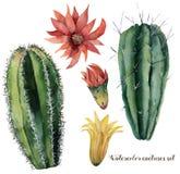 被设置的水彩仙人掌和花 与在白色背景隔绝的红色和黄色花的手画仙影拳 免版税库存图片