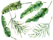 被设置的水彩热带树叶子 在深蓝背景的手画香蕉和椰子绿叶异乎寻常的分支 库存例证