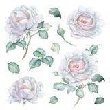 被设置的水彩玫瑰 花、芽和叶子 库存照片