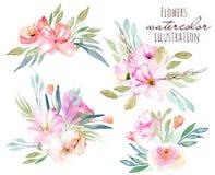 被设置的水彩领域康乃馨,玫瑰色和绿色分支花束 免版税库存照片