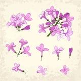 被设置的淡紫色细节 免版税图库摄影