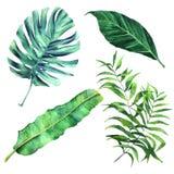 被设置的热带棕榈叶 库存例证