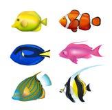 被设置的热带鱼 免版税图库摄影