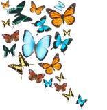 被设置的热带蝴蝶 免版税库存照片