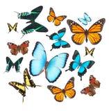 被设置的热带蝴蝶 免版税图库摄影