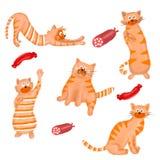 被设置的猫 免版税库存照片