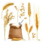 被设置的现实农业庄稼 库存例证