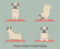 被设置的瑜伽哈巴狗 库存照片