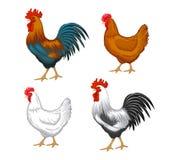 被设置的男性和女性鸡 免版税库存图片
