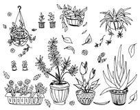 被设置的盆栽植物,手拉的设计元素 库存例证