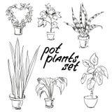 被设置的盆栽植物 手拉的设计元素 库存照片