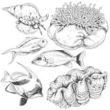 被设置的礁石动物 免版税库存图片