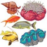 被设置的礁石动物 免版税图库摄影