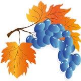 被设置的秋叶,传染媒介例证 免版税库存图片