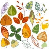 被设置的秋叶 免版税图库摄影